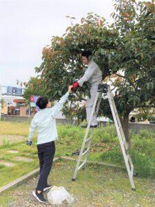 柿 (4)